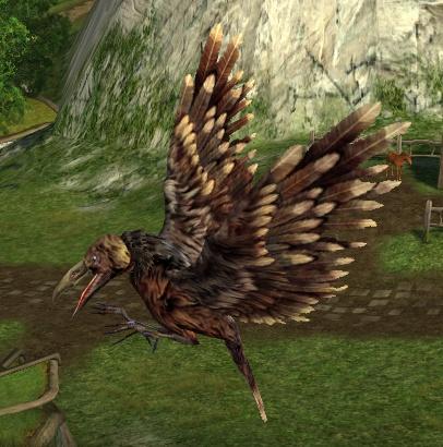 le maitre du savoir Mottled_wing_raven